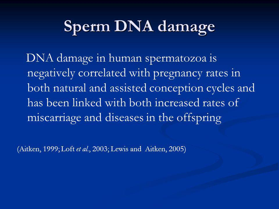 Sperm DNA damage DNA damage in human spermatozoa is negatively correlated with pregnancy rates in both natural and assisted conception cycles and has
