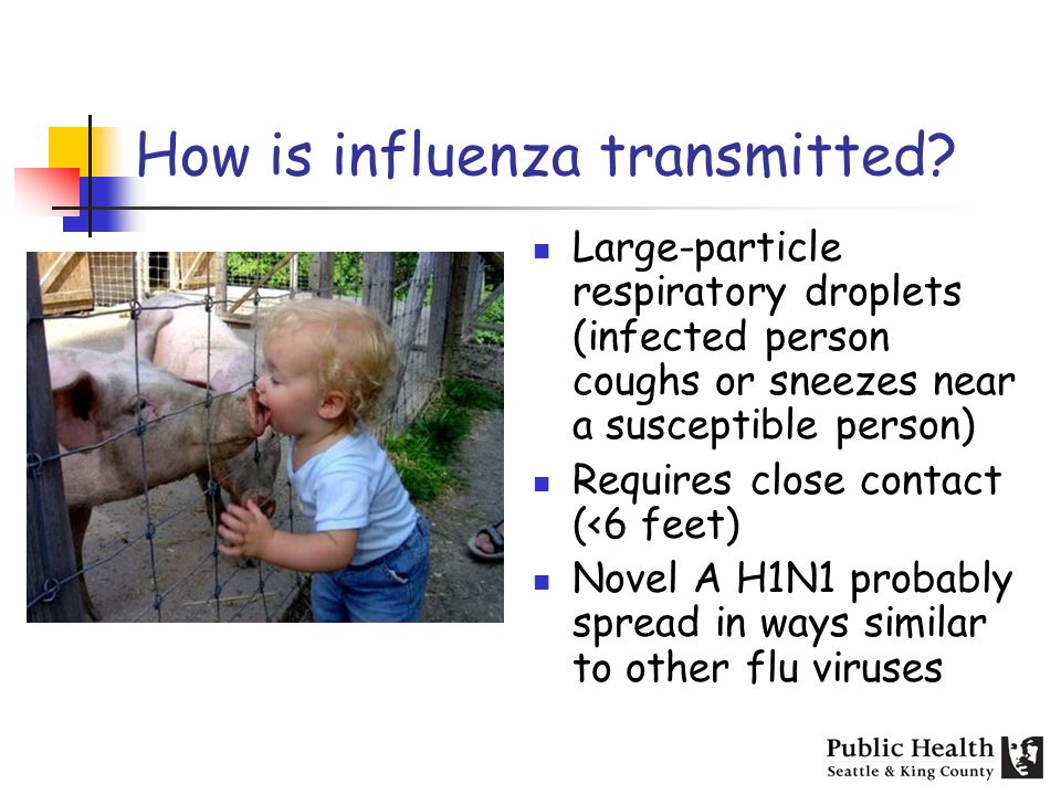 How is influenza transmitted? Large-particle respiratory droplets (infected person coughs or sneezes near a susceptible person) Requires close contact
