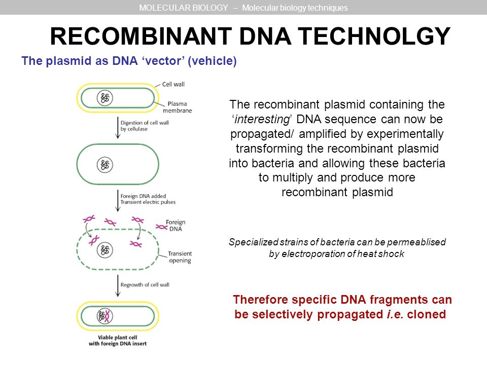 RECOMBINANT DNA TECHNOLGY MOLECULAR BIOLOGY – Molecular biology techniques The plasmid as DNA vector (vehicle) The recombinant plasmid containing thei