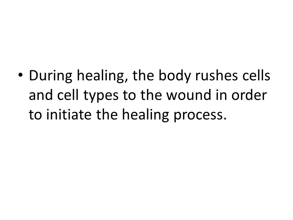 During healing, the body rushes cells and cell types to the wound in order to initiate the healing process.