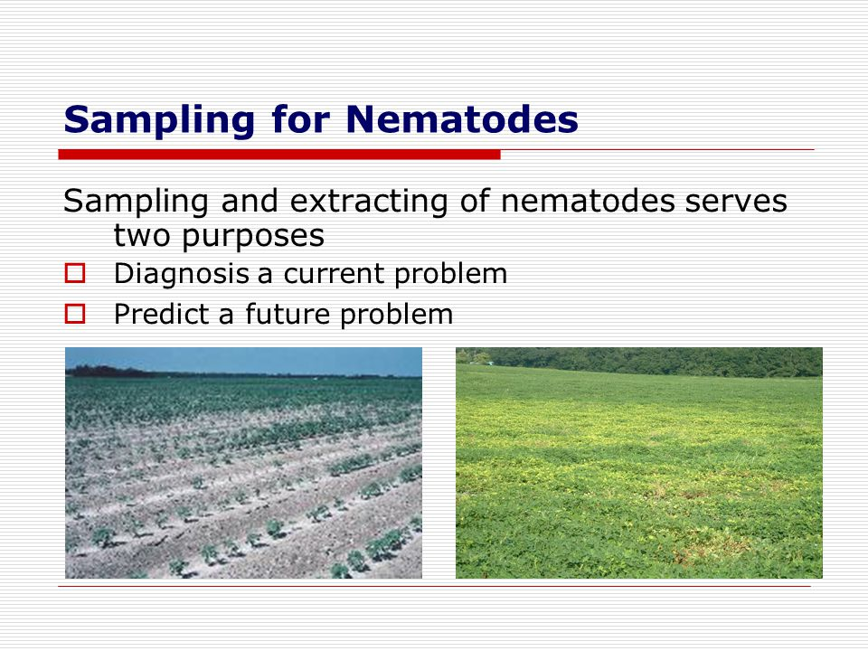 Sampling for Nematodes Sampling and extracting of nematodes serves two purposes Diagnosis a current problem Predict a future problem