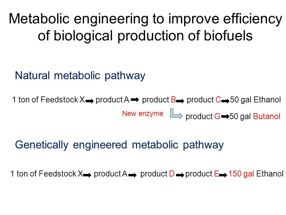 Metabolic engineering to improve efficiency of biological production of biofuels Natural metabolic pathway 1 ton of Feedstock X product A product D product E 150 gal Ethanol Genetically engineered metabolic pathway 1 ton of Feedstock X product A product B product C 50 gal Ethanol product G 50 gal Butanol New enzyme