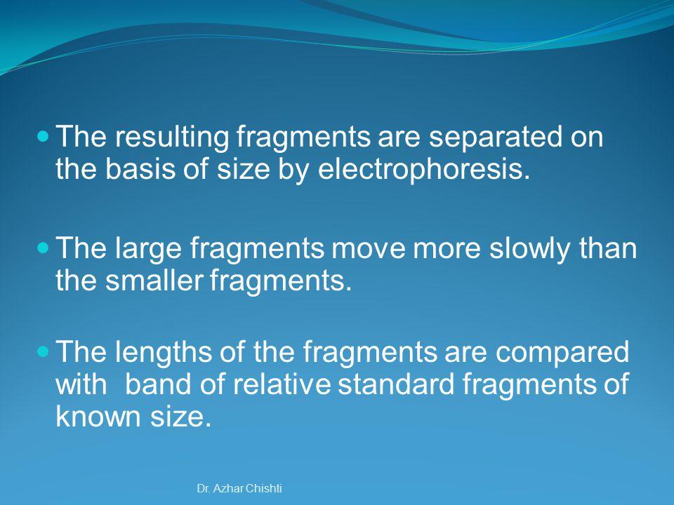 Enhanced ChemiFluoresenct (ECF) WB Detection Dr. Azhar Chishti
