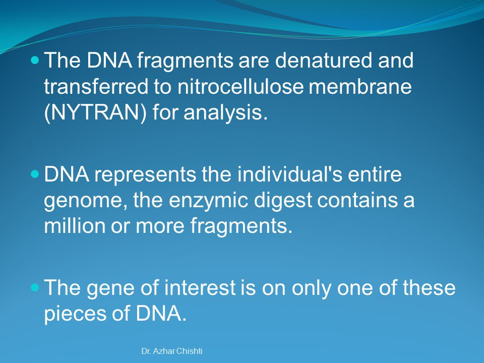 DNA segments were visualized by a nonspecific technique, they would appear as an unresolved blur of overlapping bands.