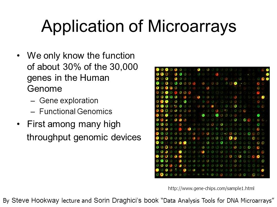 Application of Microarrays We only know the function of about 30% of the 30,000 genes in the Human Genome –Gene exploration –Functional Genomics First