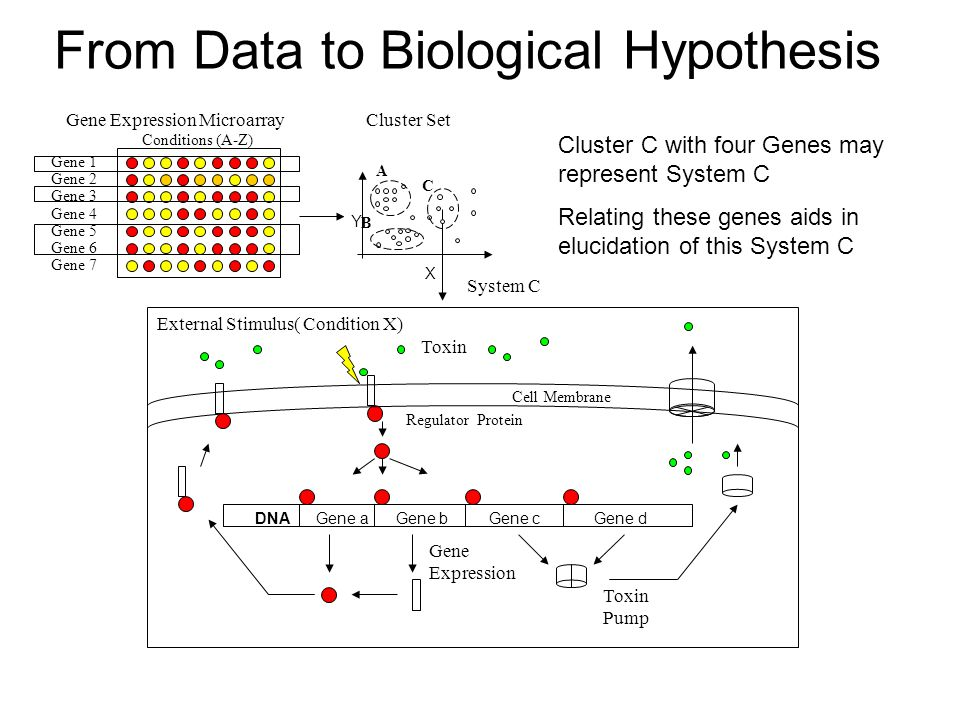 From Data to Biological Hypothesis System C Cluster C with four Genes may represent System C Relating these genes aids in elucidation of this System C