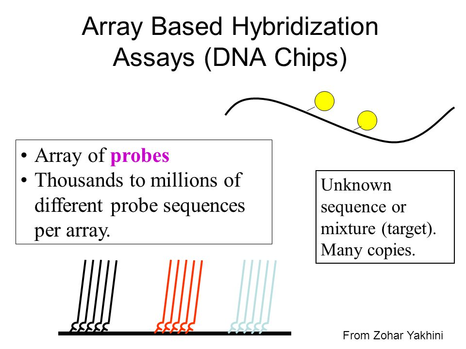 Array Based Hybridization Assays (DNA Chips) Unknown sequence or mixture (target). Many copies. Array of probes Thousands to millions of different pro