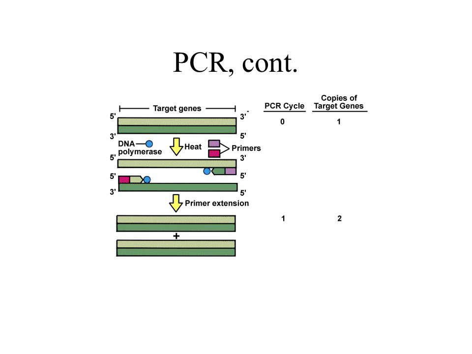 PCR, cont.