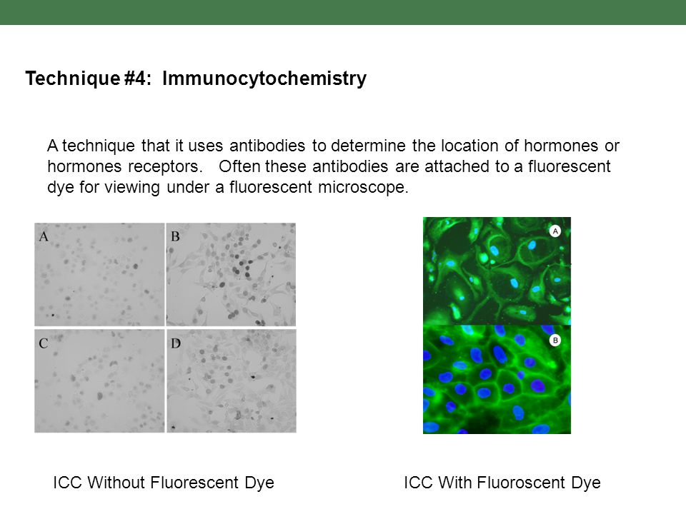 Technique #4: Immunocytochemistry A technique that it uses antibodies to determine the location of hormones or hormones receptors. Often these antibod