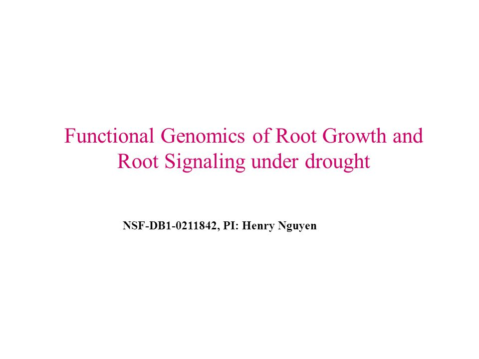 NSF-DB1-0211842, PI: Henry Nguyen Functional Genomics of Root Growth and Root Signaling under drought
