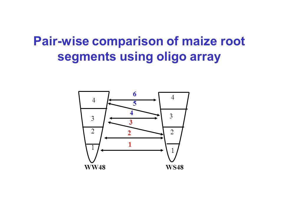 WW48WS48 1 2 3 4 1 2 3 4 1 2 3 4 5 6 Pair-wise comparison of maize root segments using oligo array
