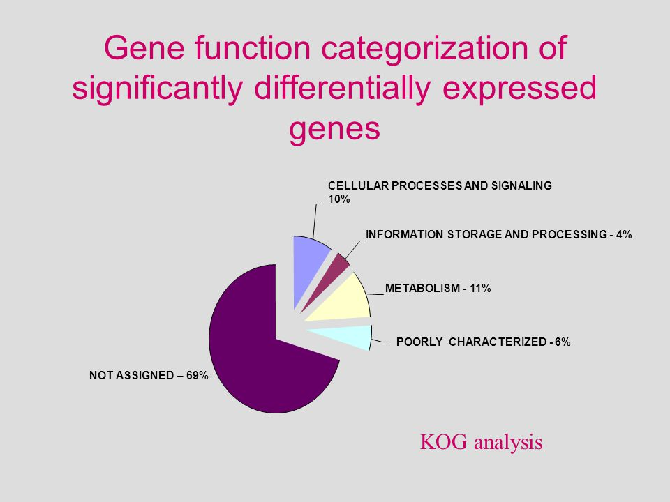 POORLY CHARACTERIZED - 6% METABOLISM - 11% INFORMATION STORAGE AND PROCESSING - 4% CELLULAR PROCESSES AND SIGNALING 10% NOT ASSIGNED – 69% Gene function categorization of significantly differentially expressed genes KOG analysis