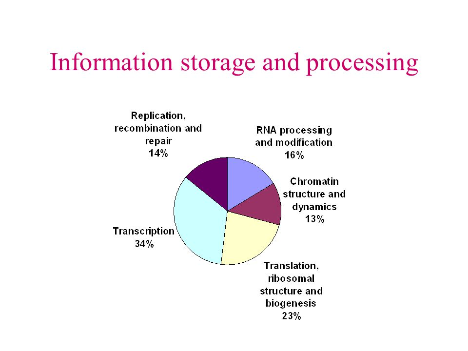 Information storage and processing
