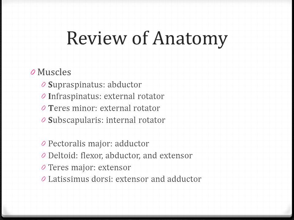 Review of Anatomy 0 Muscles 0 Supraspinatus: abductor 0 Infraspinatus: external rotator 0 Teres minor: external rotator 0 Subscapularis: internal rota