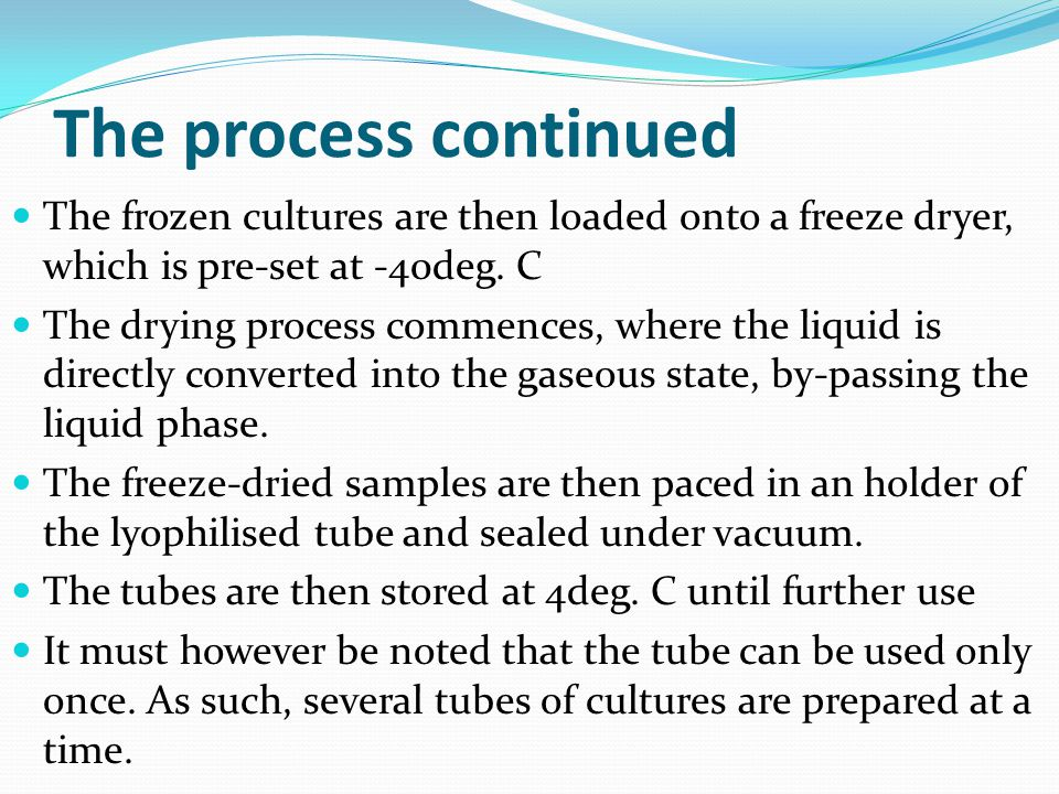 The process continued The frozen cultures are then loaded onto a freeze dryer, which is pre-set at -40deg.