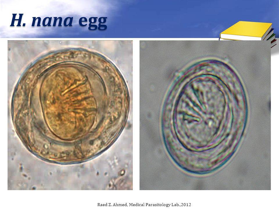 H. nana egg Raed Z. Ahmed, Medical Parasitology Lab.,2012