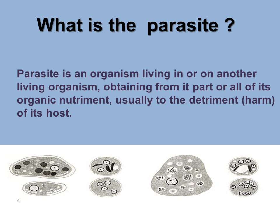 What is the parasite .