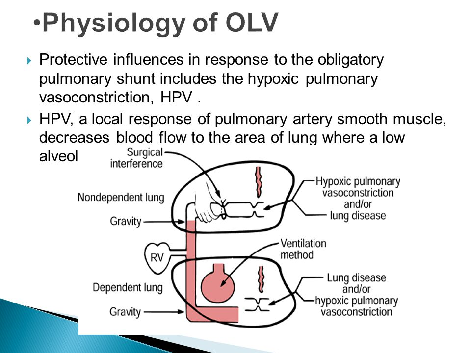 Protective influences in response to the obligatory pulmonary shunt includes the hypoxic pulmonary vasoconstriction, HPV. HPV, a local response of pul