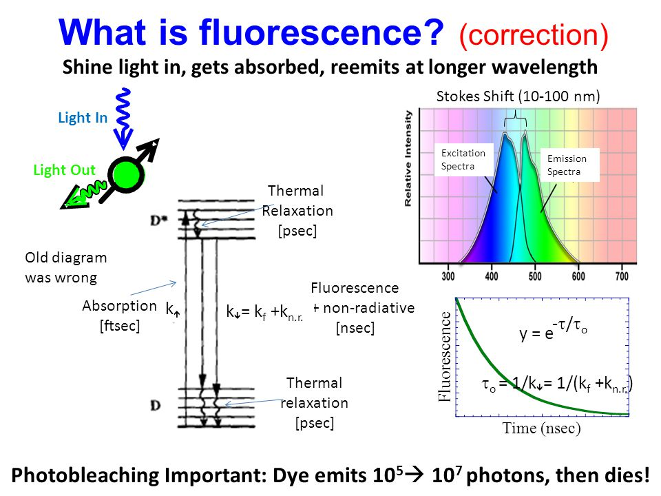 Shine light in, gets absorbed, reemits at longer wavelength Stokes Shift (10-100 nm) Excitation Spectra Emission Spectra Photobleaching Important: Dye