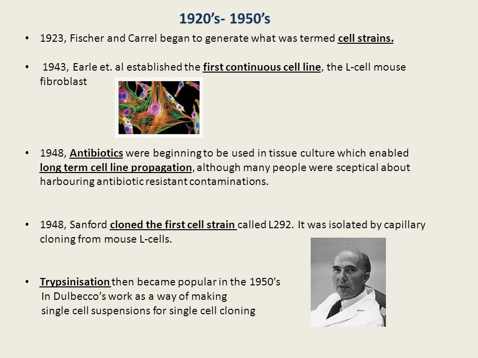 1923, Fischer and Carrel began to generate what was termed cell strains. 1943, Earle et. al established the first continuous cell line, the L-cell mou