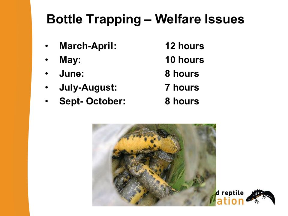 Bottle Trapping – Welfare Issues March-April: 12 hours May: 10 hours June: 8 hours July-August: 7 hours Sept- October: 8 hours