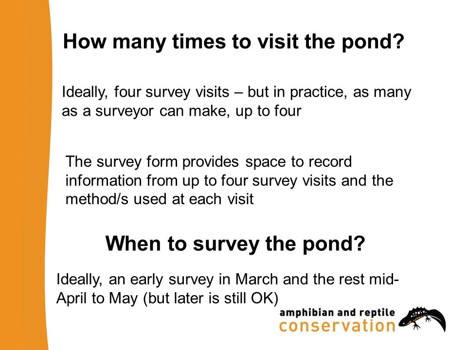 How many times to visit the pond.