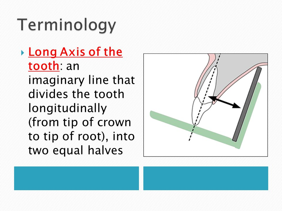 Long Axis of the tooth: an imaginary line that divides the tooth longitudinally (from tip of crown to tip of root), into two equal halves