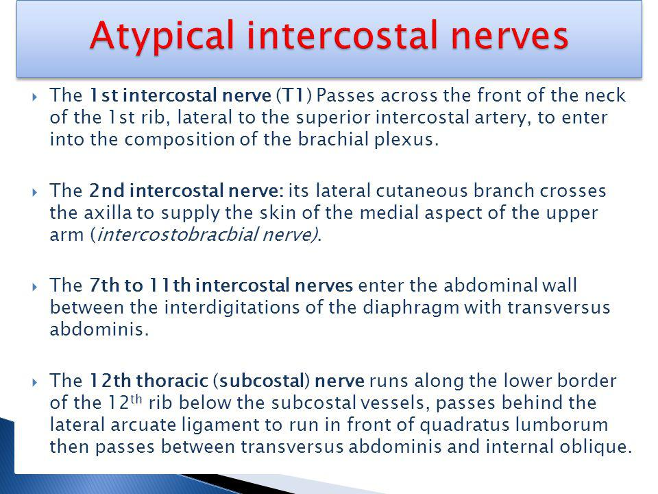 The 1st intercostal nerve (T1) Passes across the front of the neck of the 1st rib, lateral to the superior intercostal artery, to enter into the composition of the brachial plexus.