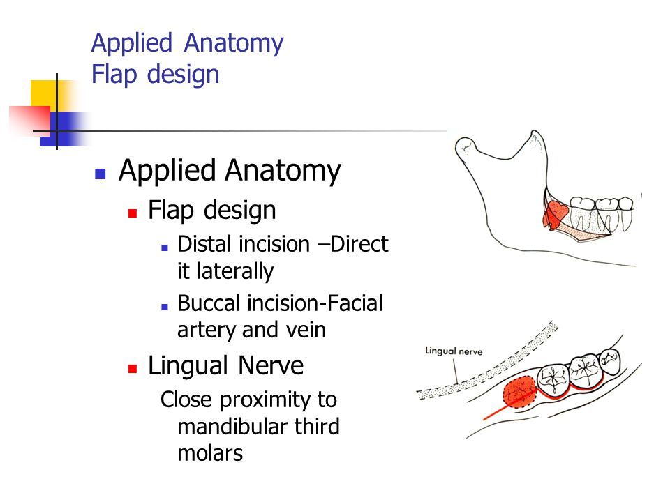 Applied Anatomy Flap design Applied Anatomy Flap design Distal incision –Direct it laterally Buccal incision-Facial artery and vein Lingual Nerve Clos