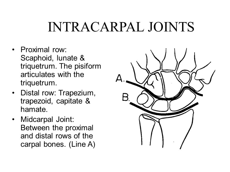 INTRACARPAL JOINTS Proximal row: Scaphoid, lunate & triquetrum. The pisiform articulates with the triquetrum. Distal row: Trapezium, trapezoid, capita