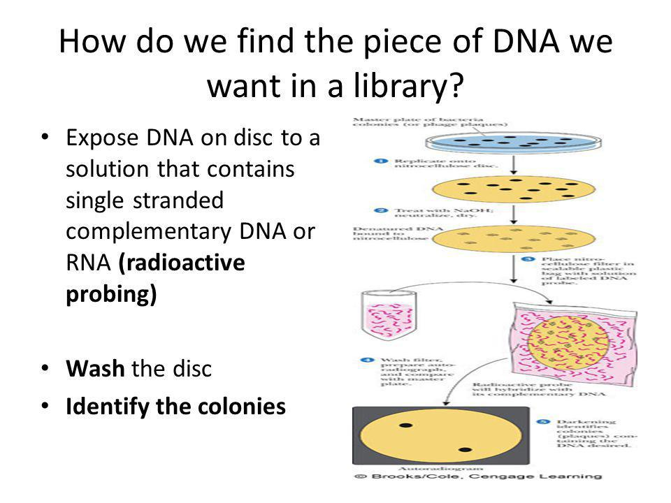 How do we find the piece of DNA we want in a library.