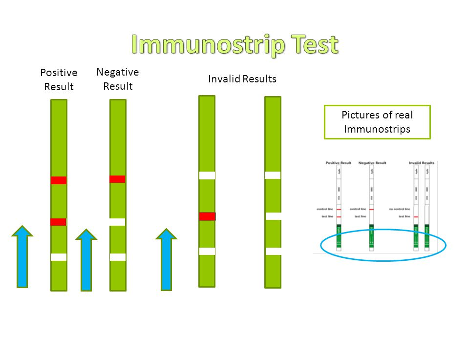 Positive Result Negative Result Invalid Results Pictures of real Immunostrips