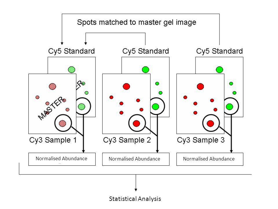 Normalised Abundance Statistical Analysis