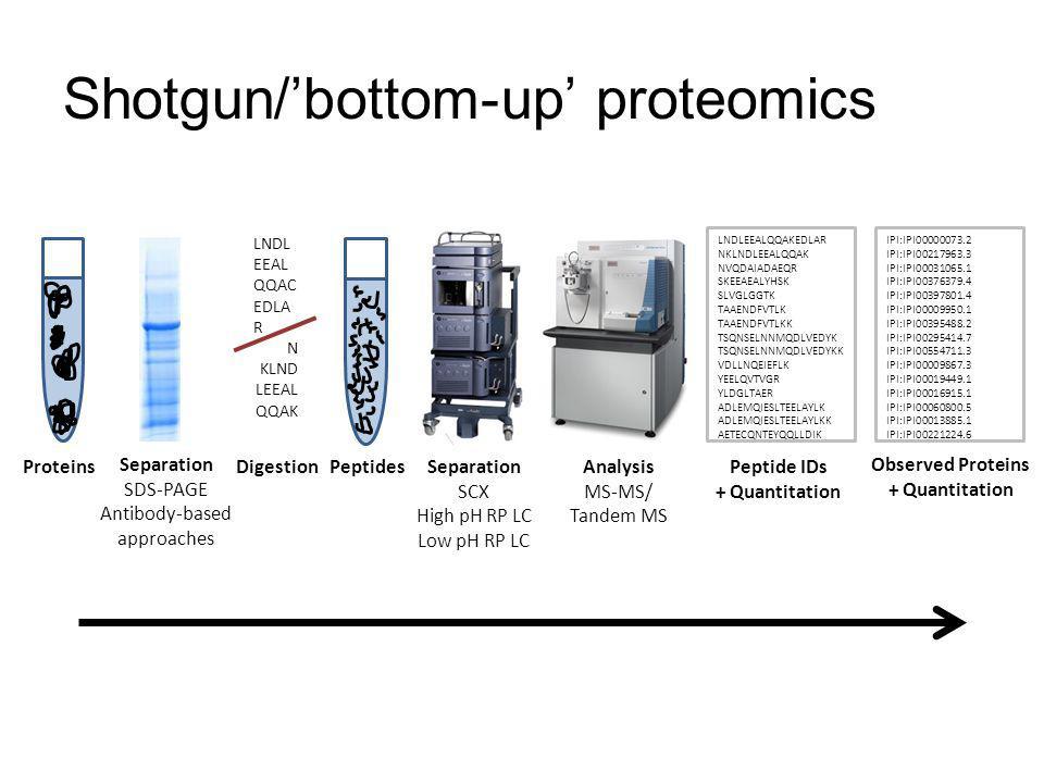 Shotgun/bottom-up proteomics ProteinsPeptides LNDLEEALQQAKEDLAR NKLNDLEEALQQAK NVQDAIADAEQR SKEEAEALYHSK SLVGLGGTK TAAENDFVTLK TAAENDFVTLKK TSQNSELNNM