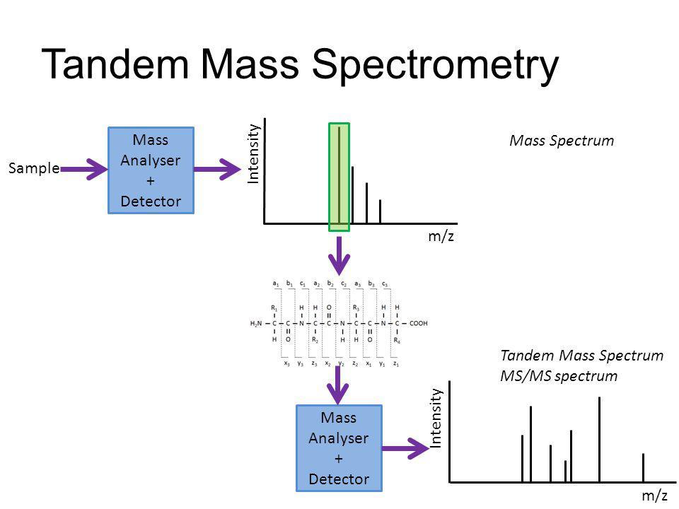 Tandem Mass Spectrometry Mass Analyser + Detector Sample Intensity m/z Mass Analyser + Detector m/z Intensity Mass Spectrum Tandem Mass Spectrum MS/MS
