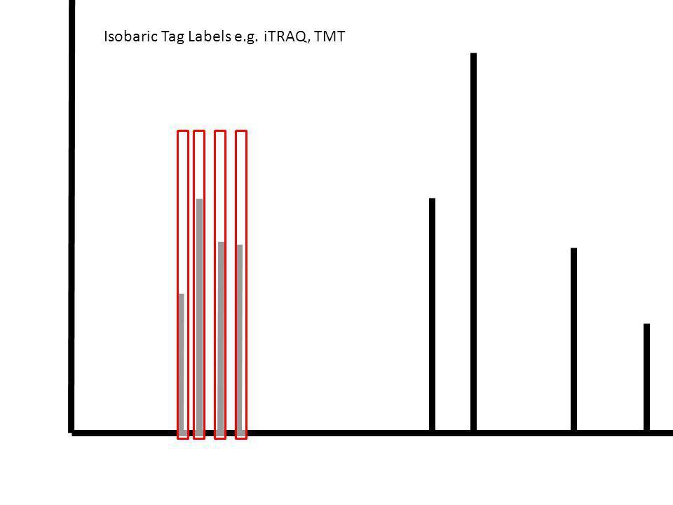 Isobaric Tag Labels e.g. iTRAQ, TMT