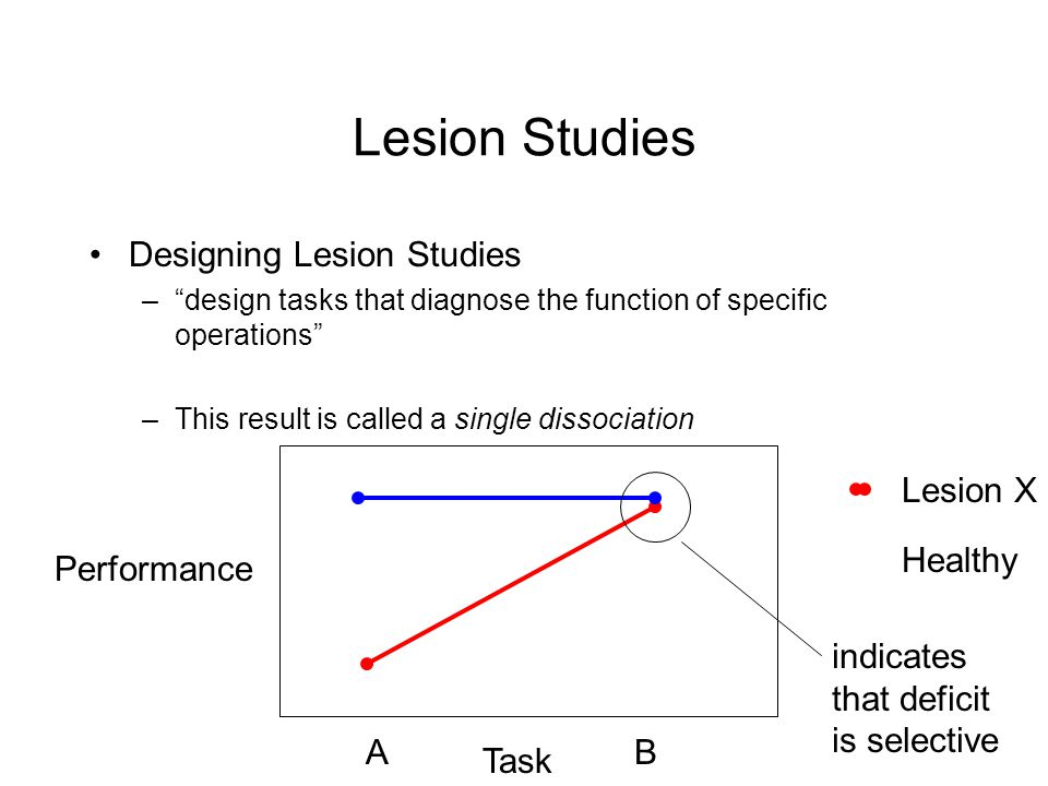 Lesion Studies Designing Lesion Studies –design tasks that diagnose the function of specific operations –This result is called a single dissociation Performance Task A Lesion X Healthy B indicates that deficit is selective