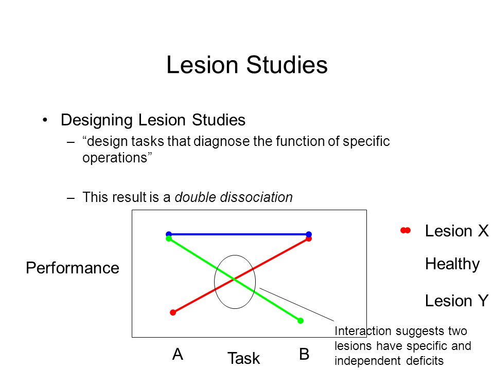 Lesion Studies Designing Lesion Studies –design tasks that diagnose the function of specific operations –This result is a double dissociation Performa