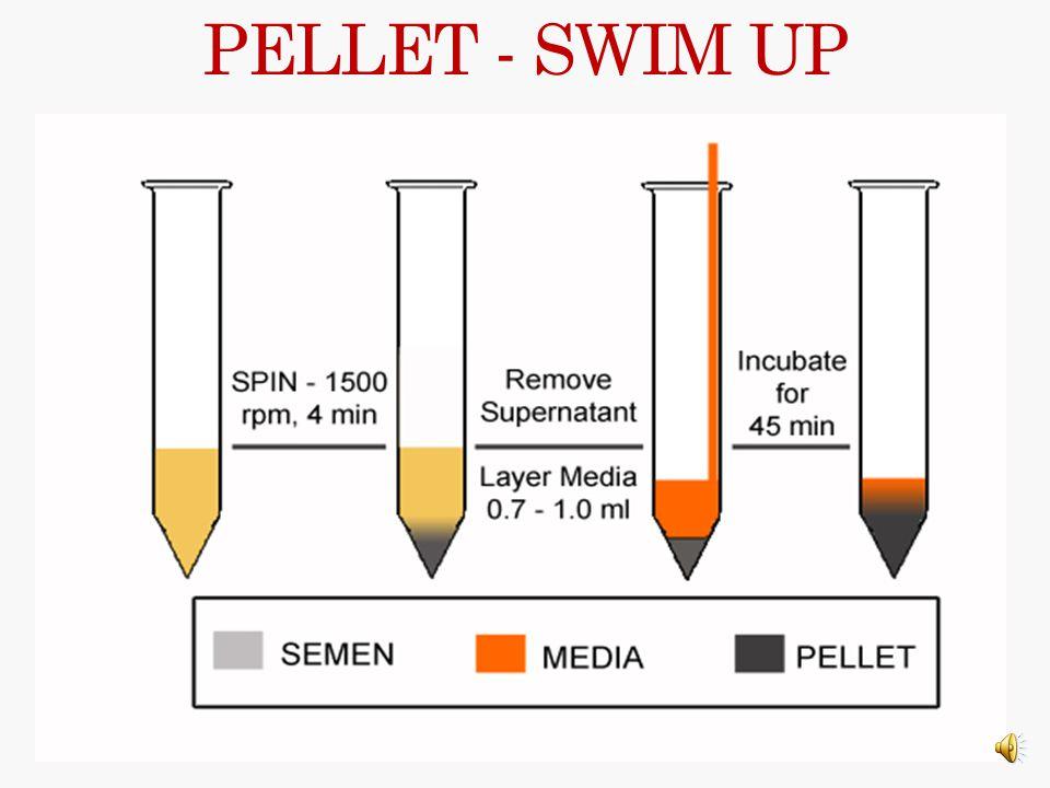 PELLET - SWIM UP