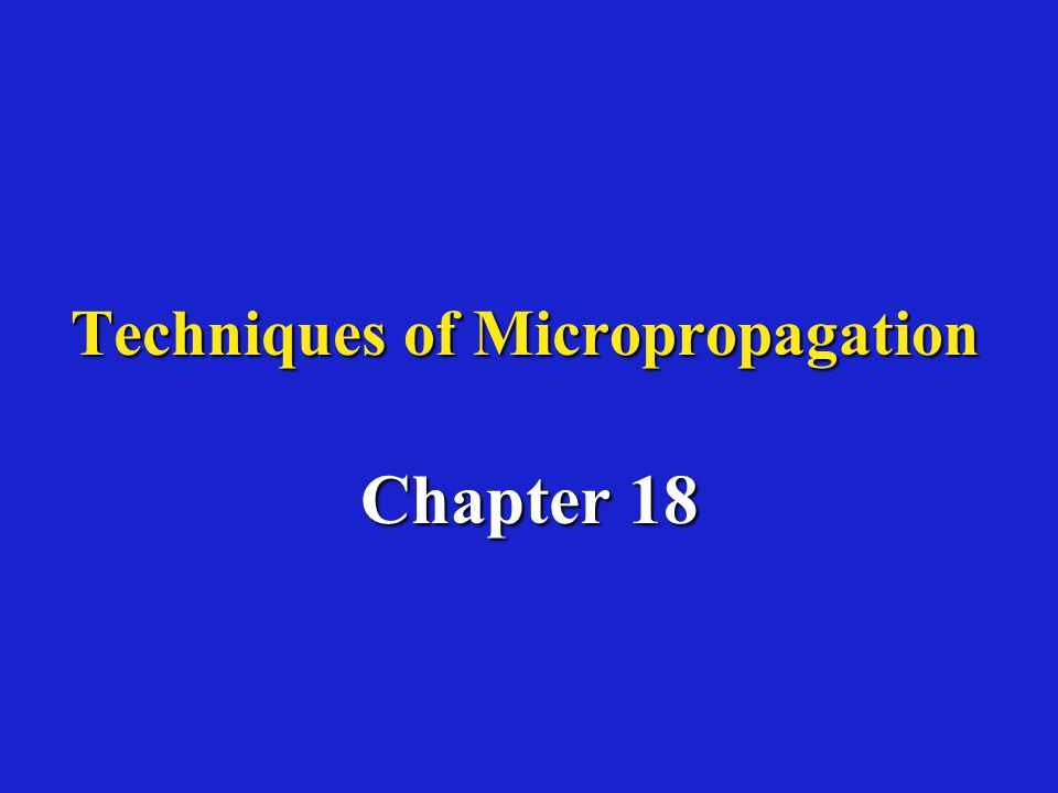 Systems used to regenerate plantlets by micropropagation I.) Axillary shoot formationI.) Axillary shoot formation –Meristem tip culture Results in plantlets free from viruses, fungi and bacteria (esp.
