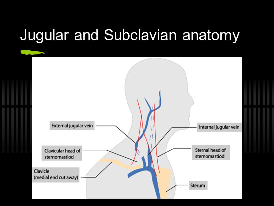 Jugular and Subclavian anatomy