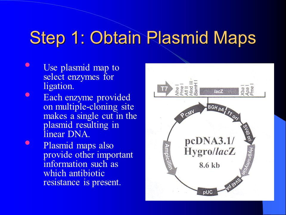 Steps Required 1.Add total volume of ligated plasmid to a competent cell.
