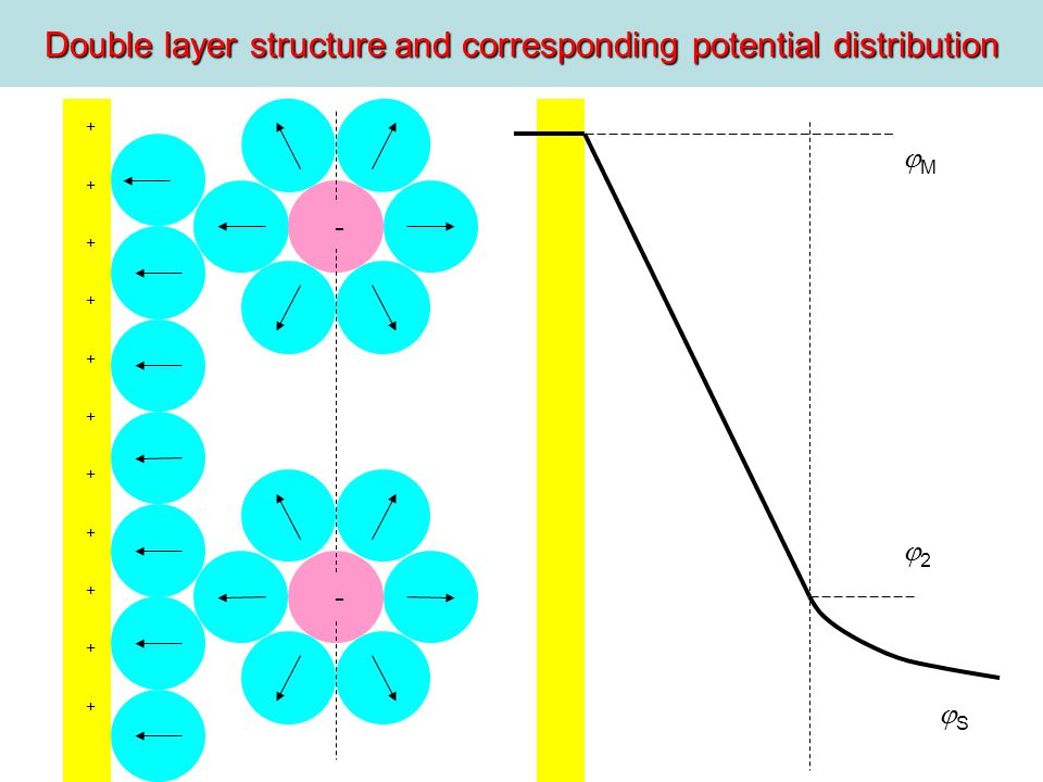 Double layer structure and corresponding potential distribution M 2 S