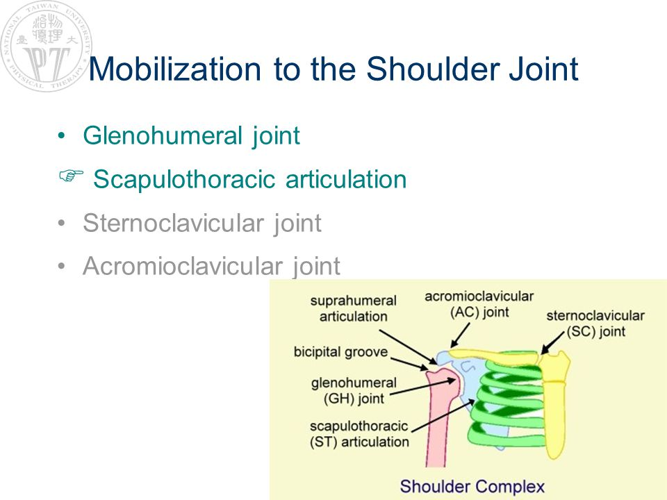 Mobilization to the Shoulder Joint Glenohumeral joint Scapulothoracic articulation Sternoclavicular joint Acromioclavicular joint
