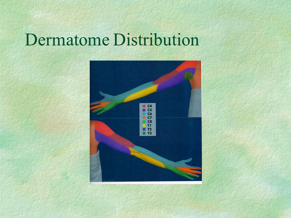 Dermatome Distribution