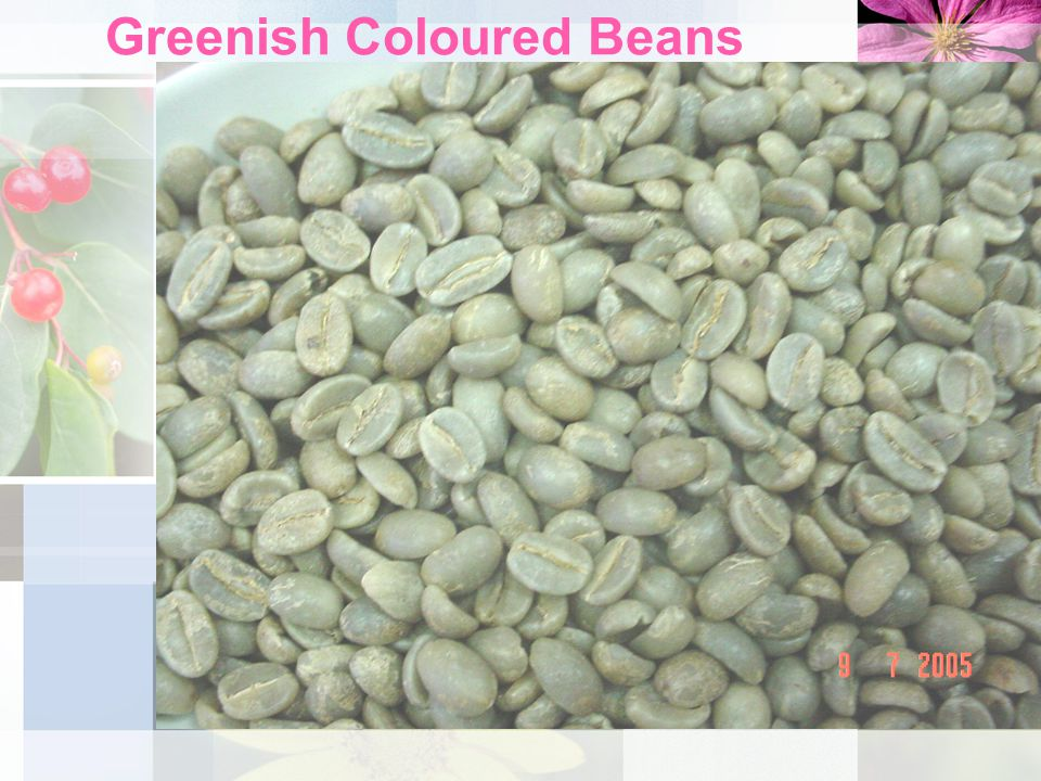 Greenish Coloured Beans