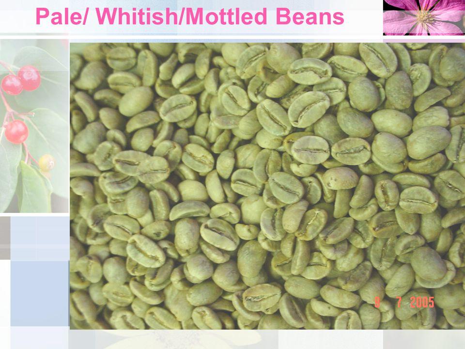 Pale/ Whitish/Mottled Beans