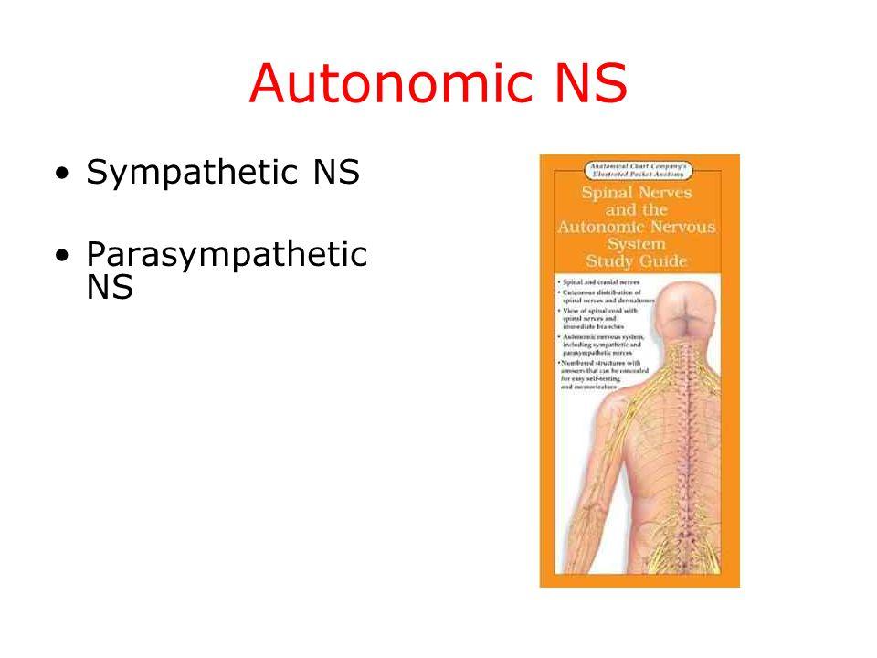 Autonomic NS Sympathetic NS Parasympathetic NS