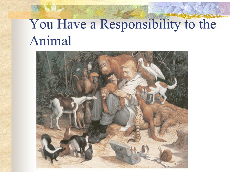 You Have a Responsibility to the Animal