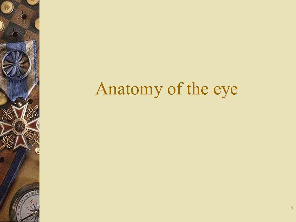 Anatomy of the eye 5